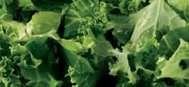 What veggie beat Kale?