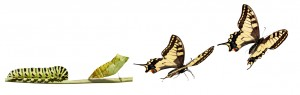 Transform_Butterfly_iStock_000009820211Small